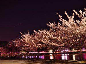 arashiyamasakura12