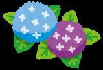 三渓園あじさい祭り2018見ごろ開花状況は?混雑情報に駐車場も!