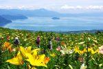 琵琶湖ゆり園2018の開花状況は?割引にクーポン情報に混雑も!