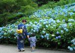 神戸市立森林植物園あじさい2018の見頃は?開花や混雑状況も!